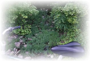 Smittyride_200623_Tue_1951~-DSC00185_bike, shallow stream, plants_s4p_wFa_316x216.jpg